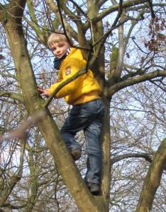 Robbie im Baum
